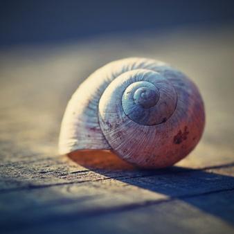 close-up-van-de-slak-shell-op-een-plank_1161-99
